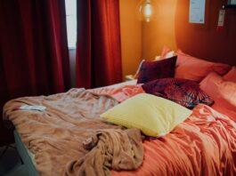 Can bedbugs live in cardboard?
